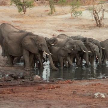 Botswana Zimbabwe konvooi 4x4 reis