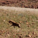 Hyena bezoek, 30 jaar samen reizen deel 4