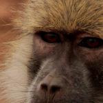 North Luangwa, 30 jaar samen reizen Deel 8