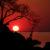 Kafue National Park, 30 jaar samen reizen Deel 10